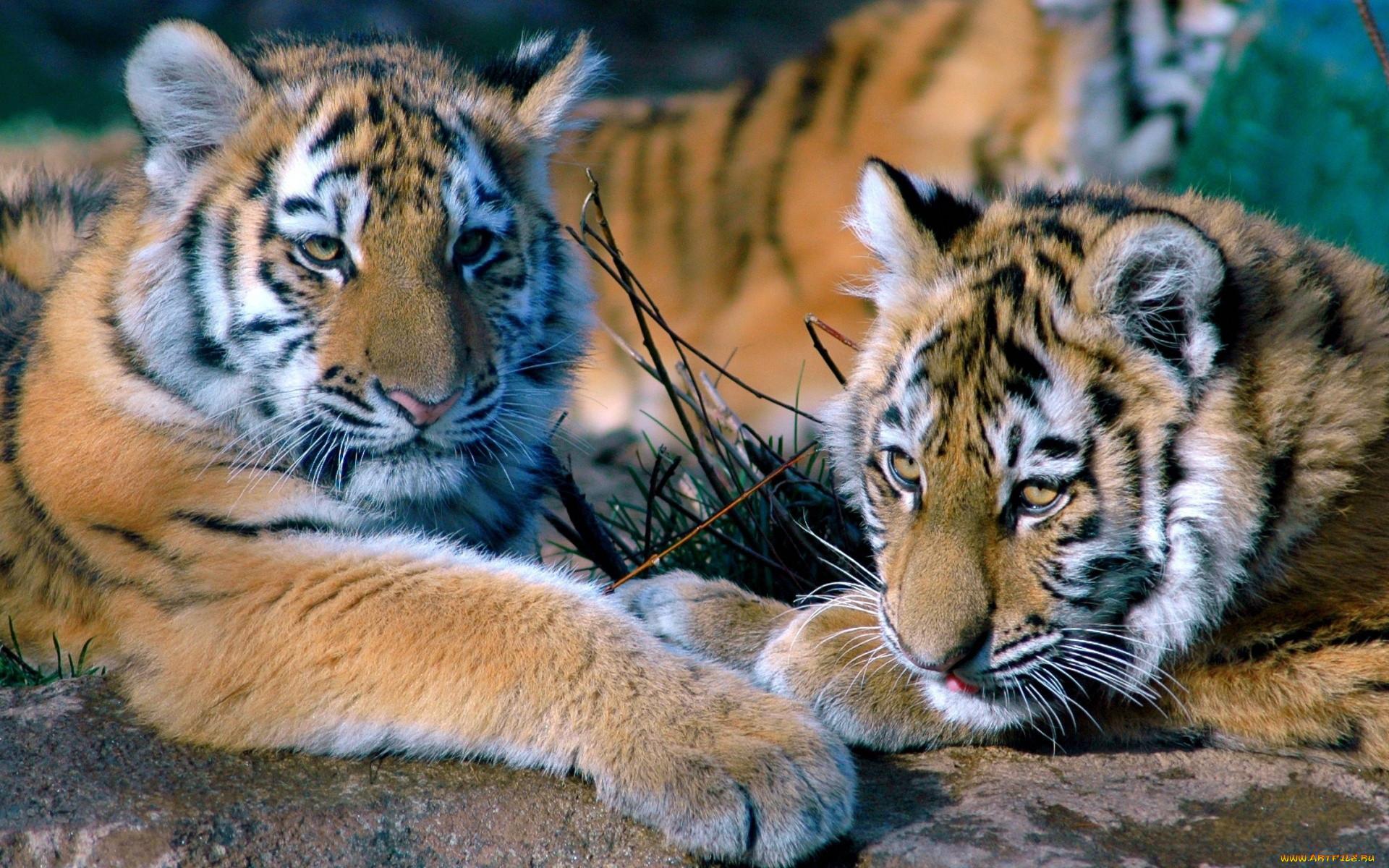 Фотообои животные фото